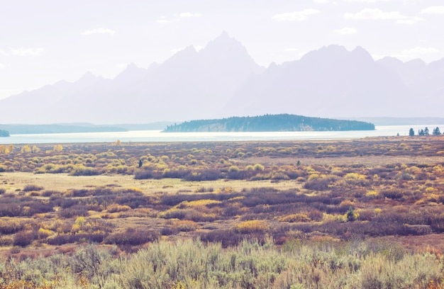 Helle farben der herbstsaison im grand teton national park, wyoming, usa