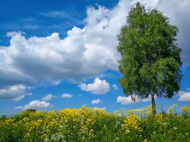 Helle frühlingslandschaft mit blauem himmel und grünem gras mit gelben blumen.