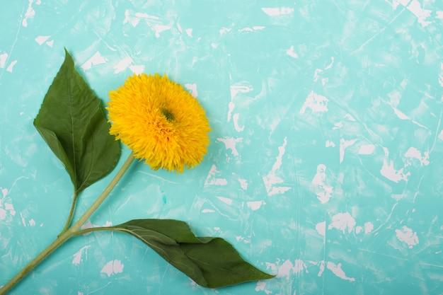 Helle gelbe sonnenblume auf einem blauen marmor
