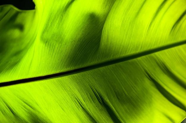 Helle hellgrüne vögel nisten farnblatt bei gegenlicht