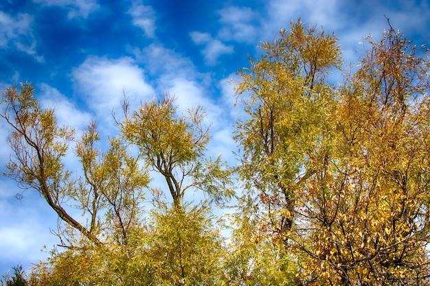 Helle herbstbäume im herbst gegen den blauen himmel.