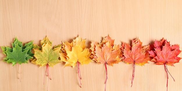 Helle mehrfarbige ahornblätter in reihe auf holzoberfläche