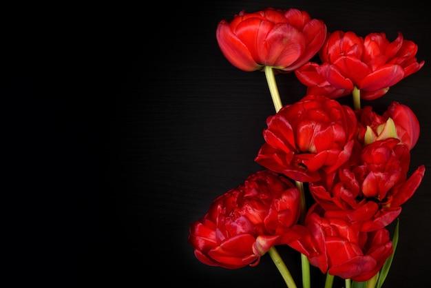 Helle rote flauschige tulpen auf einer schwarzen oberfläche