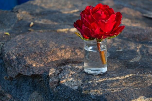 Helle scharlachrote rose in einem glas wasser
