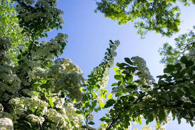 Helle sommerszene mit wild wachsenden pflanzen des gartens
