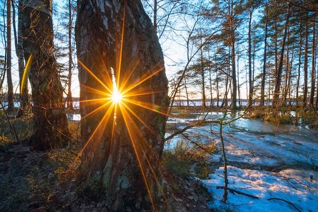 Helle sonne durch die bäume. frühlingswaldlandschaft.