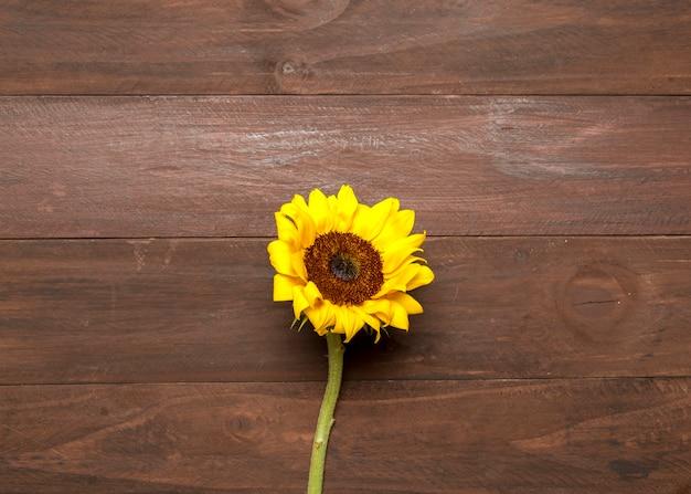 Helle sonnenblume auf hölzernem hintergrund