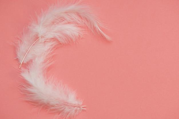 Helle weiße federn auf einem rosa hintergrund