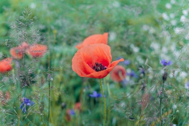 Helle wildblumen und kräuter im sonnenlicht. sehr flacher fokus.