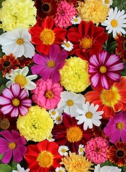 Heller blumenhintergrund, draufsicht. strauß gartenblumen.