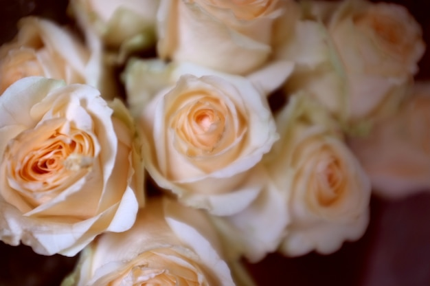 Heller rosa rosenhintergrund