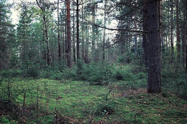 Helles frühlingsgrün im morgengrauen im wald. im zeitigen frühjahr erwacht die natur zum leben.