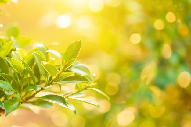 Helles junges grün verlässt mit bokeh lichtern