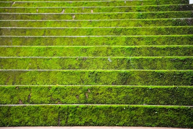 Hellgrüne moosige steintreppe tritt hintergrund in der herbstsaison voran