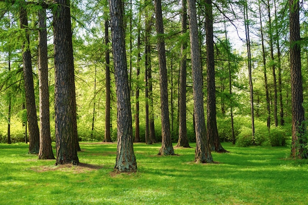Hellgrüne natürliche frühlingslandschaft mit bäumen im park
