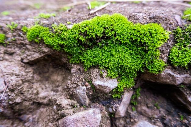 Hellgrünes moos wächst auf felsen, ein frisches gefühl.
