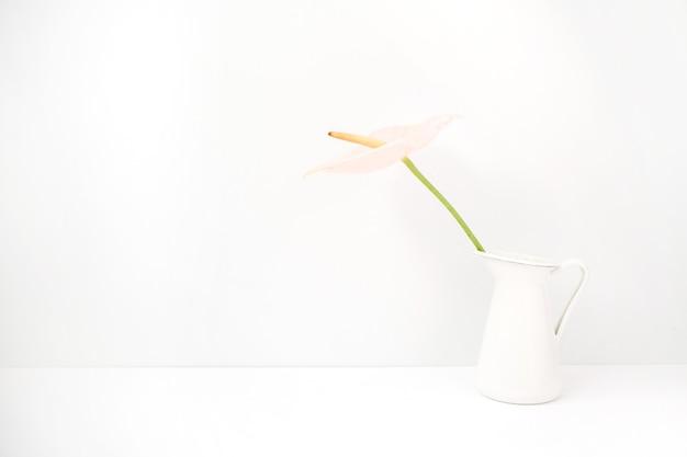 Hellrosa anthuriumblume in der weißen gießkanne nahe weiß. vorderansicht. blumen