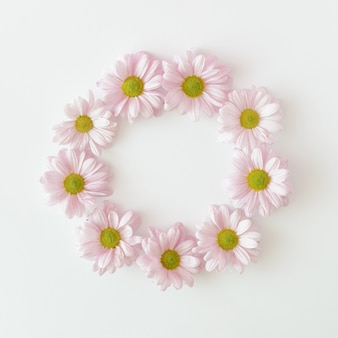 Hellviolette chrysanthemenblüten, die in einem kreis auf weißem hintergrund angeordnet sind. frühlingssommerhochzeit und muttertagskonzept.