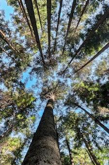 Herauf den bezirk, der geschossen von den hölzernen bäumen schaut