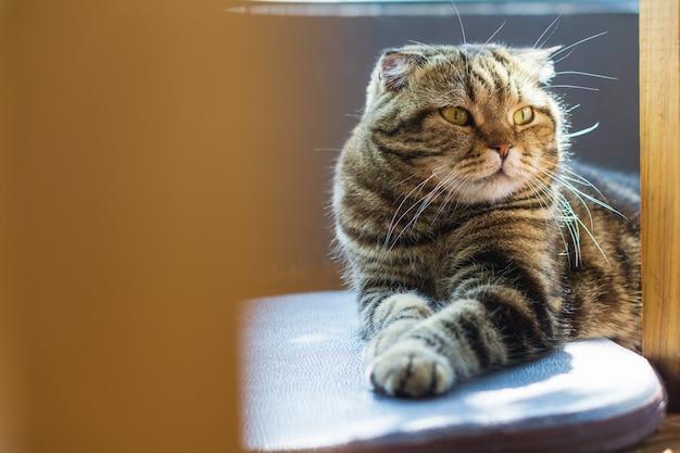 Herauf tabbykatze mit einem tigermuster geschlossen, das auf dem boden sich entspannt