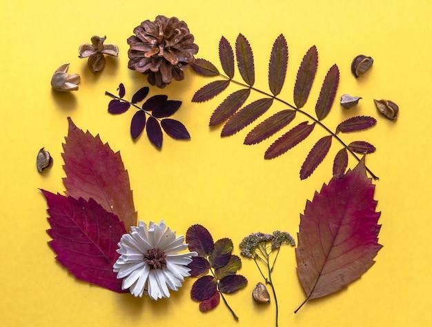 Herbarium-rahmen