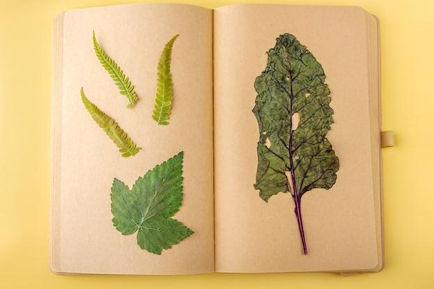 Herbarium verschiedener gepresster getrockneter pflanzen auf blättern von vintage-notizbüchern, kräuterkundler. botanischer satz wilder blumen, kräuter. flache herbstkomposition, platz für text kopieren