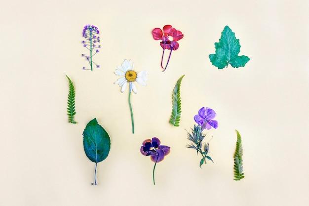 Herbarium verschiedener gepresster getrockneter pflanzen auf gelbem hintergrund. botanischer satz wilder blumen, kräuter. flache herbstzusammensetzung,