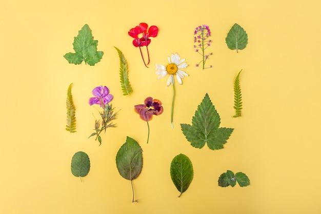 Herbarium verschiedener gepresster getrockneter pflanzen auf gelbem hintergrund. botanischer satz wilder blumen, kräuter. flacher laienherbstzusammensetzungsblumenhintergrund