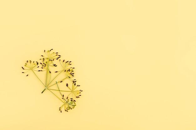 Herbarium von gepressten getrockneten gemüseblättern dill auf gelbem hintergrund. botanisches kraut und pflanze. flache herbstkomposition, platz für text kopieren