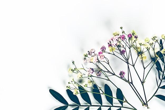 Herbarium von wildblumen mit grünen zweigen. von oben betrachten. botanischer blumenhintergrund.