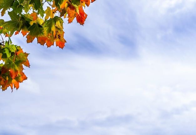 Herbst ahornblätter mit dem blauen himmel und weiß könnte, zweige baum mit grünem, gelbem, orange und rotem herbstlaub vor dem himmel könnte