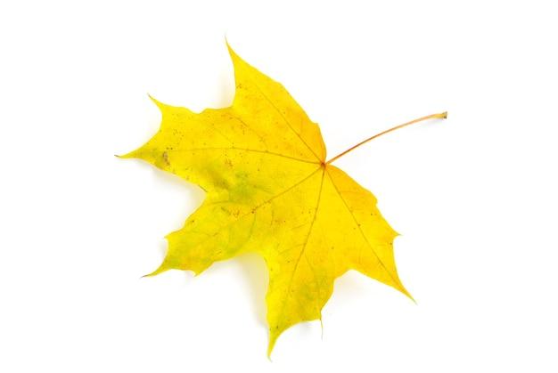 Herbst-ahornblatt isoliert auf weißem hintergrund
