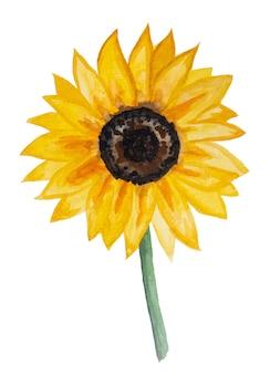 Herbst-aquarell-kollektion mit gelber sonnenblume isoliert