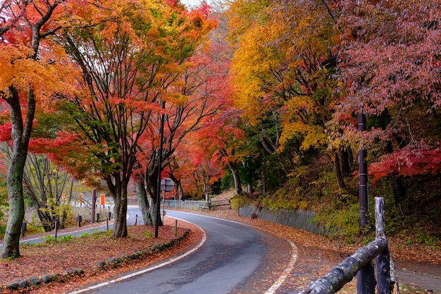 Herbst auf der straße zusammen mit gelb-rot-orange-grünen ahornblättern in der herbstsaison werden die bäume auf beiden seiten im jahreszeitenwechsel auf der straße bunt