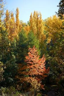 Herbst baumwipfel ändern ihre farbe Premium Fotos