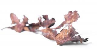 Herbst blätter, herbst