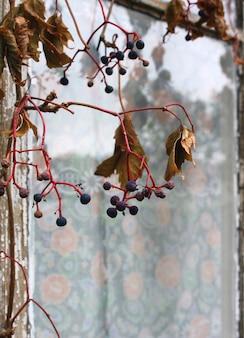 Herbst dekorative trauben