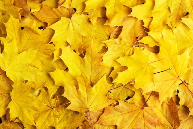 Herbst der blätter auf einem weißen hintergrund