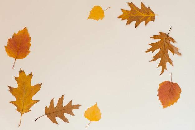 Herbst flach legen hintergrund auf beige
