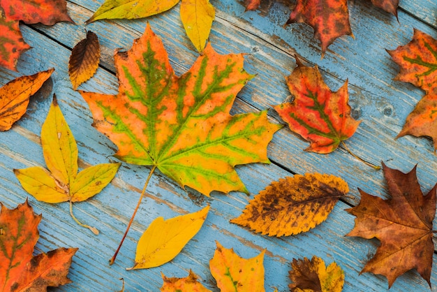 Herbst gelbe blätter