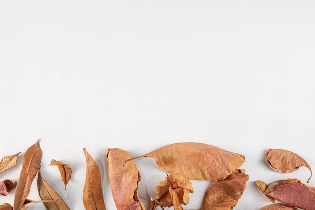 Herbst getrocknete blätter auf weiß. flache lage, draufsicht, copyspace