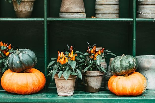 Herbst halloween halloween dekor mit kürbissen