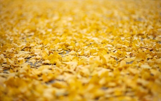 Herbst. herbst hintergrund. gefallene gelbe blätter im fokus. nahaufnahme.