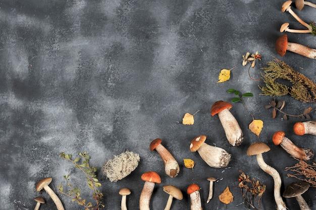 Herbst hintergrund der pilze