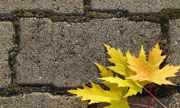 Herbst hintergrund. gelbe ahornblätter liegen auf den pflastersteinen.