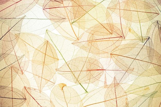 Herbst hintergrund. herbstlaub textur