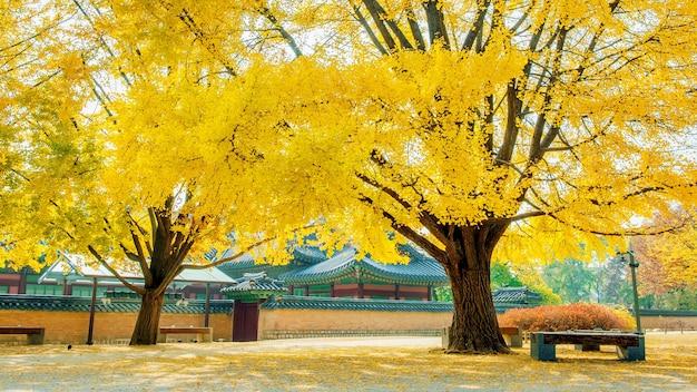 Herbst im gyeongbokgung-palast, südkorea.