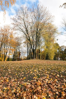 Herbst im park - fotografierte bäume und laub im herbst, der ort - ein park,