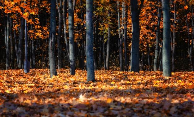 Herbst im russischen park