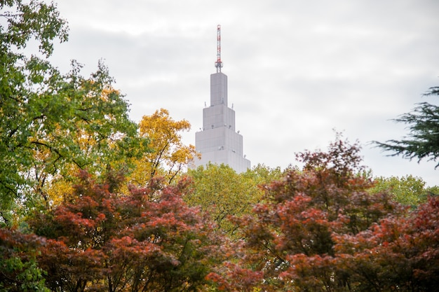Herbst im shinjuku park, tokio, japan